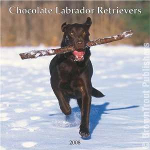 Chocolate Labrador Retriever Dog   2008 Browntrout Wall