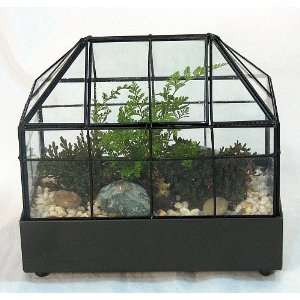 Long Gothic House Terrarium (Wardian Case) with Access Window and Live